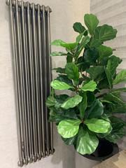 Fototapeta Roślina w modernistycznej łazience  obraz
