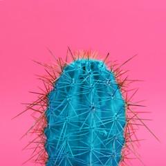 Foto op Plexiglas Cactus Beautiful bright cactus on pink background, closeup