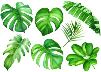 summer set of tropical green plants, on isolated white background, leaves of banana palm, liana monstera, watercolor illustration, botanical painting