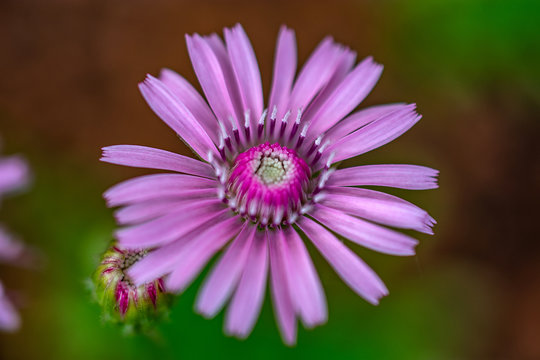 light purple flower detail