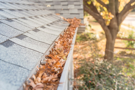 Clogged gutter at front yard near roof shingles of residential house full of dried leaves