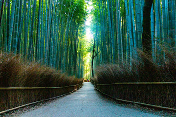 Bamboo Grove Road in Arashiyama. Ukyo-ku, Kyoto City, Kyoto, Japan