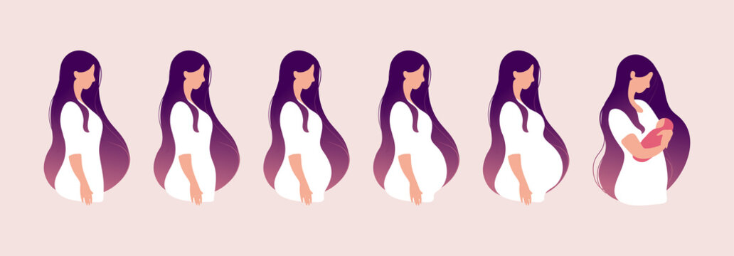 The main stages of pregnancy. Changes in the female body during pregnancy week after week. Set for infographics. Pregnancy Calendar. Flat stock vector illustration.