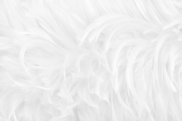 Beautiful white grey bird feathers pattern texture background.
