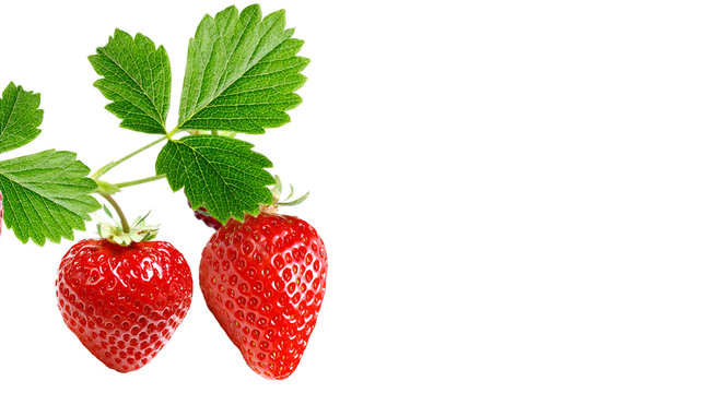 red strawberry garden plant witch berries