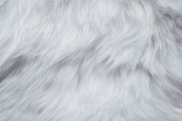 Closeup of White Fur Texture. Smooth Fluffy and Silky Background Wall mural