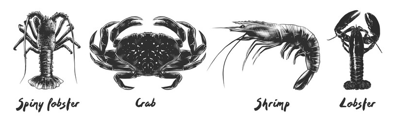 Vector engraved vintage style illustrations of spiny lobster, crab, shrimp, lobster for menu, logo, decoration and emblem. Hand drawn sketches of seafood in monochrome isolated on white background.
