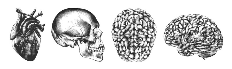 Vector engraved style illustrations for posters, decoration and logo. Hand drawn sketch of skull, heart and brain in monochrome isolated on white background. Detailed vintage woodcut style drawing.