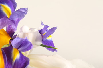 flowers irises and tulips lie on a white background