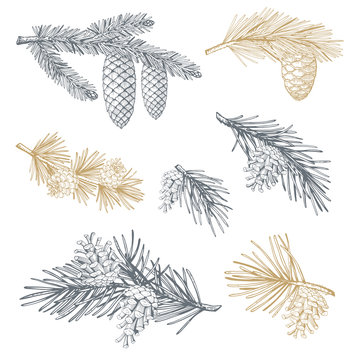 Hand drawn set with pine cones and branches. Vector illustrations
