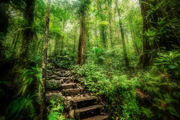 Steps in Basse Terre jungle
