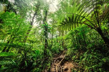 Huge ferns in Basse Terre jungle