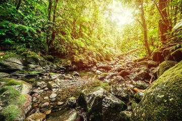 Small stream in Basse Terre jungle in Guadeloupe