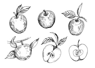 Set of sketch apples. Hand drawn illustration converted to vector. Isolated on white background