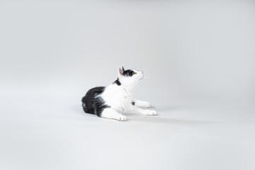 Schwarzweiße Katze liegt auf grauem Hintergrund und schaut neugierig nach oben