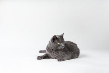 Grey oneeyed Cat