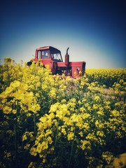 Wall Mural - Farm tractor in a rapeseed field and blue sky, beautiful spring day