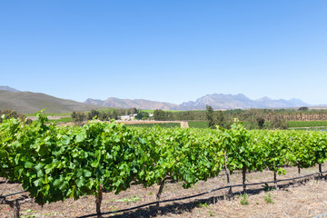 Robertson Wine Valley, Western Cape, South Africa  in spring