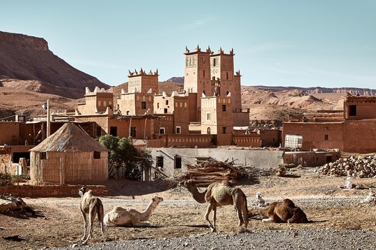 Camels near a historical castle in Tamdakht, Morocco