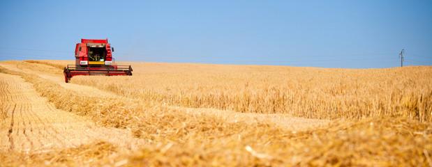 Moissonneuse dans les champs de blé en France Fototapete
