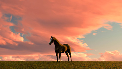 Tuinposter Koraal Horse Outdoor at Sunset 3D Rendering