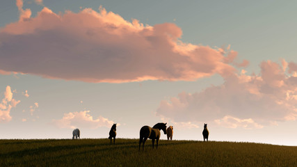 Wall Murals Salmon Horse Outdoor at Sunset 3D Rendering