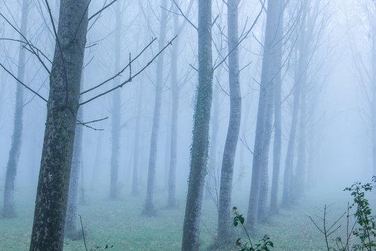 arbre de foret brouillard