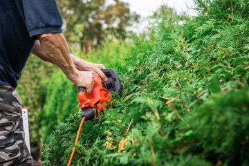 Gardener using electric hedge clippers for trimming hedge