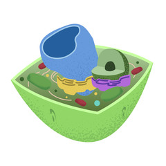 The insides of a Plant Cell