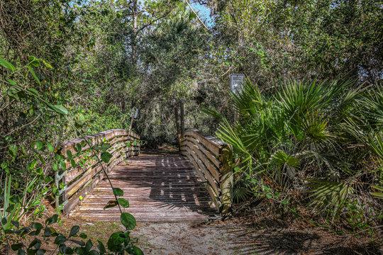 Foot Bridge in a Florida Woodland