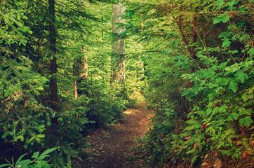 Foto op Aluminium Weg in bos Summer green forest