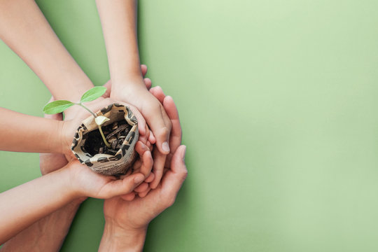 hands holding seedling plants in newspaper pot, montessori education , CSR  social responsibility, Eco green sustainable living, zero waste, plastic free, reponsible consumption, earth day concept