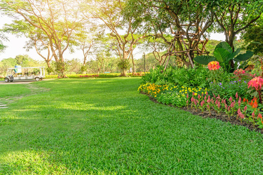 Smooth green grass lawn in good care maintenance garden, flowering plant, shrub and trees on backyard under morning sunlight, small pattern of grey concrete stepping stone on left of the park