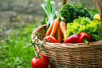 Fresh organic vegetables basket freshly harvested from the garden