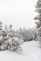 Snow-covered Winter Forest