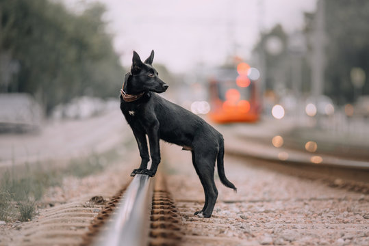 black mixed breed puppy posing outdoors on the rails