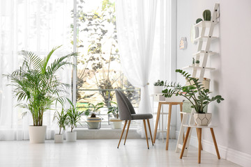 Stylish room interior with beautiful plants. Home design idea Fotomurales