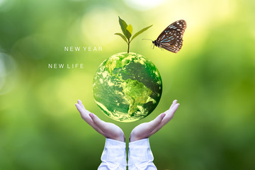 Ecology and Environment Earth.  Planet and tree with butterfly in human hands over green nature ecology, Save the earth concept, Elements of this image furnished by NASA