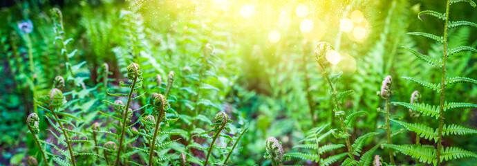 green ferm sprouts under sun