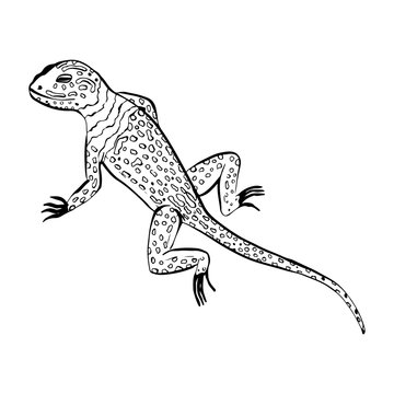 Salamander lizard animal sketch engraving raster illustration. T-shirt apparel print design. Scratch board style imitation. Black and white hand drawn image.