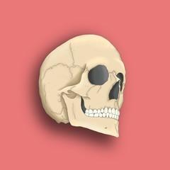 Skull bones pink picture
