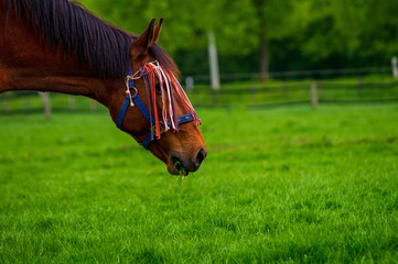 horse on grass