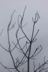 Wet branches in the fog