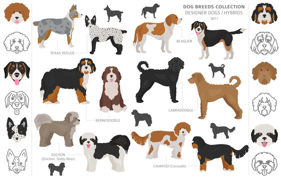 Designer dogs, crossbreed, hybrid mix pooches collection isolated on white. Flat style clipart dog set.
