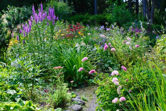 Sanguisorba obtusa (japanese burnet) and loosestrife in a beautiful flower garden