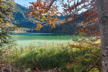 Autumn leaves by the Lake Alpsee