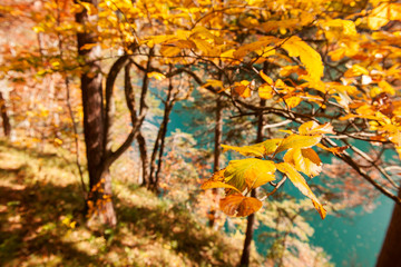 colorful autumn leaves by a bavarian lake
