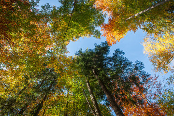View to the autumnally colorful treetops