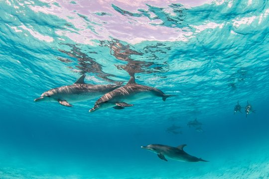 Beautiful shot of cute dolphins hanging out underwater in Bimini, Bahamas