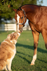 Tuinposter Paarden Horse kissing dog